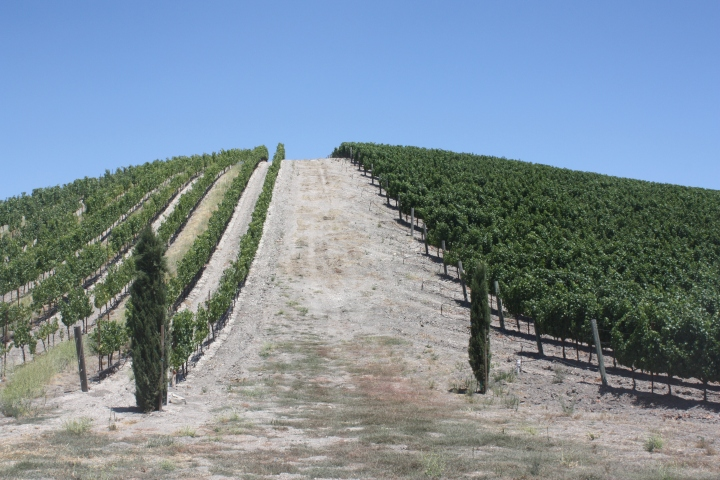The estate vineyards at L'Aventure