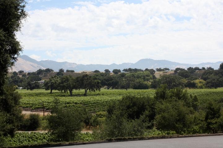Vineyards at Curtis