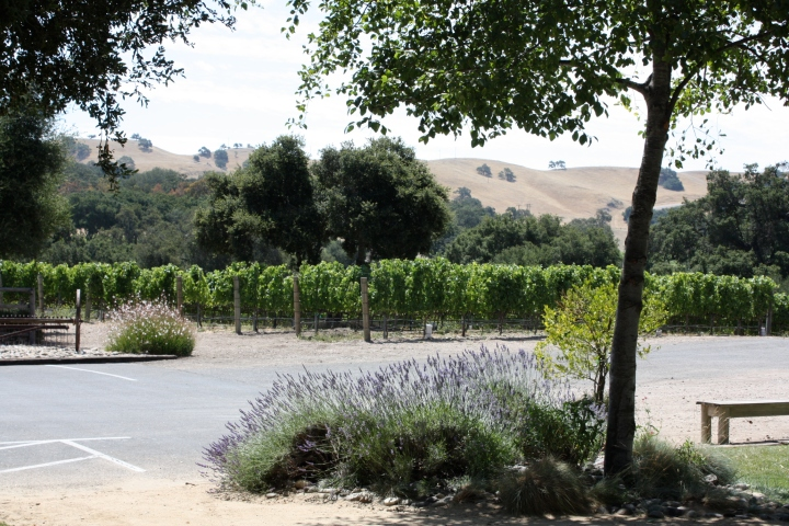 Curtis Winery