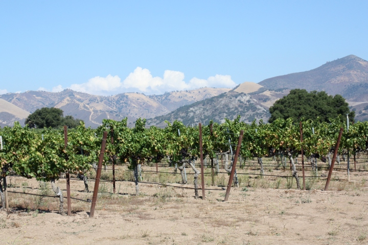 Grapevines and amazing views along the way...