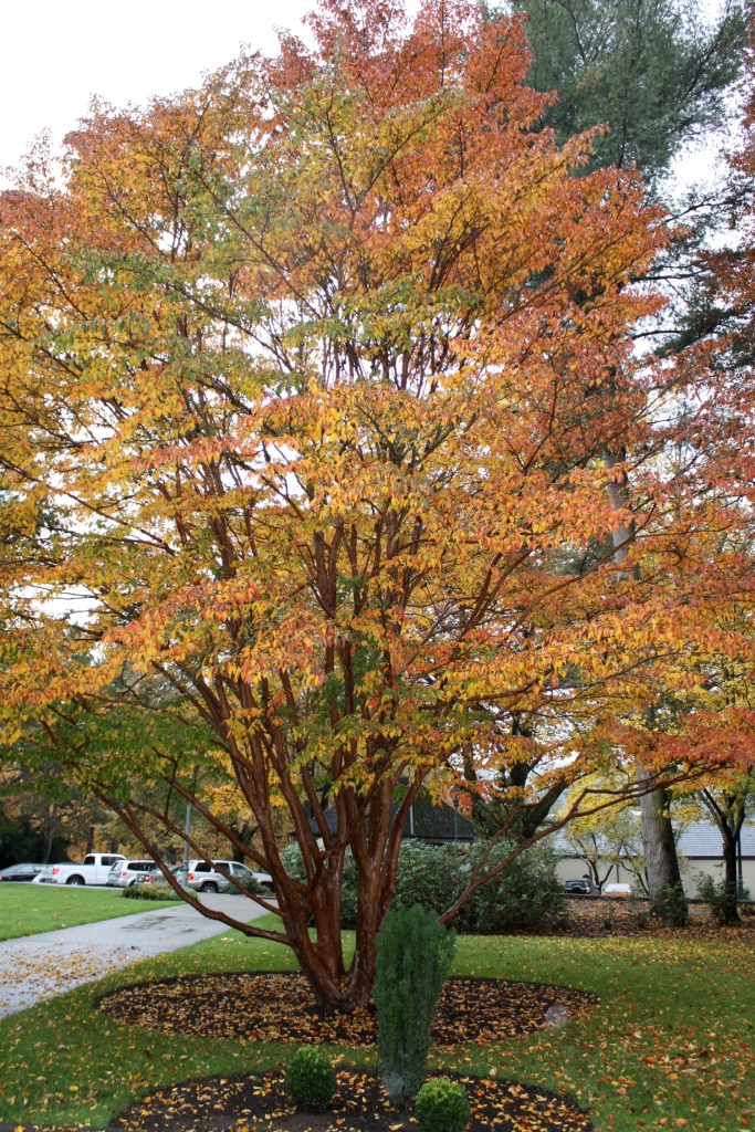 Fall colors in Woodinville, WA