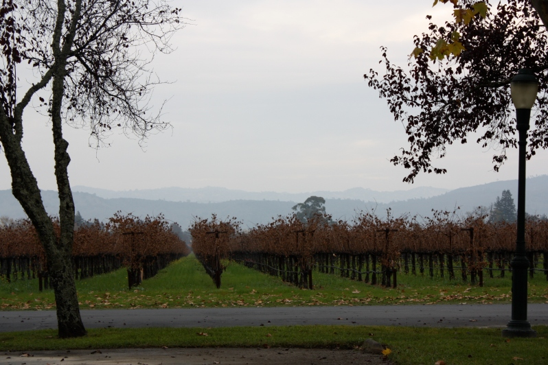 Vineyards at Rubicon Estate