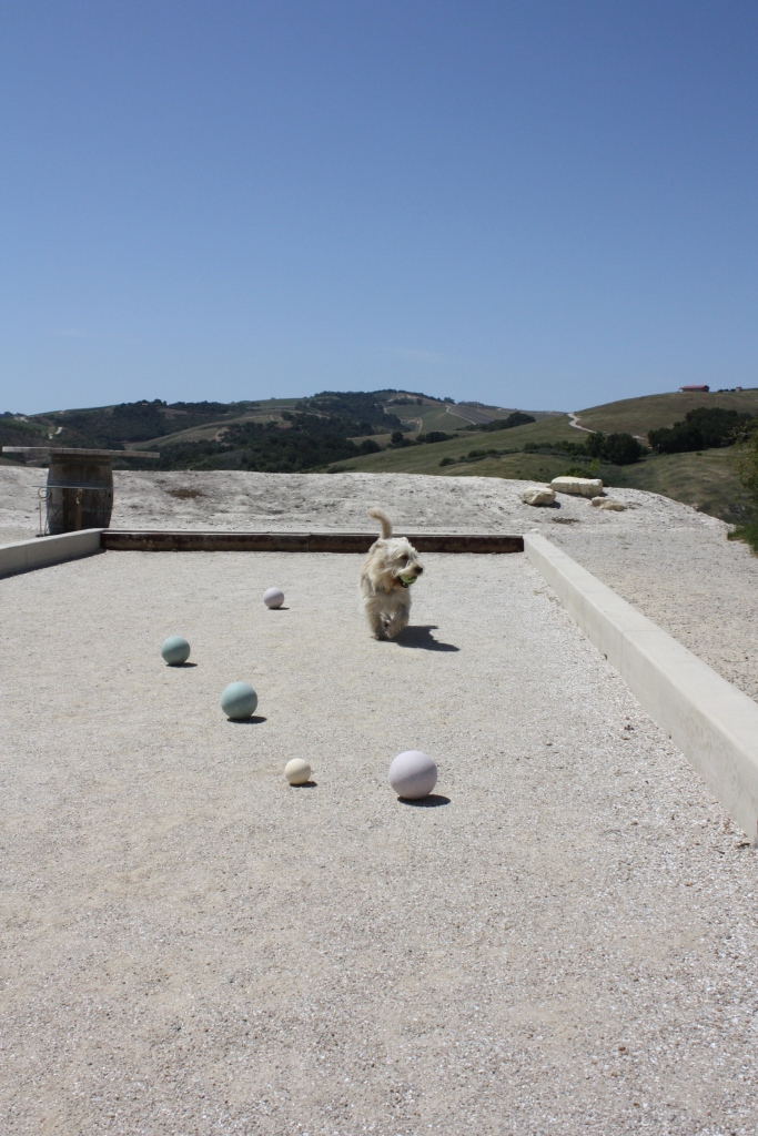 Booker enjoying the bocce ball court at Calcareous Vineyard