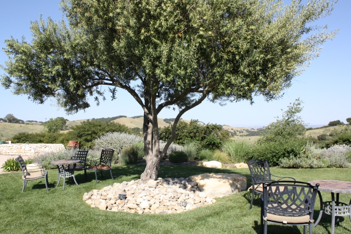 The priceless view at Calcareous Vineyard