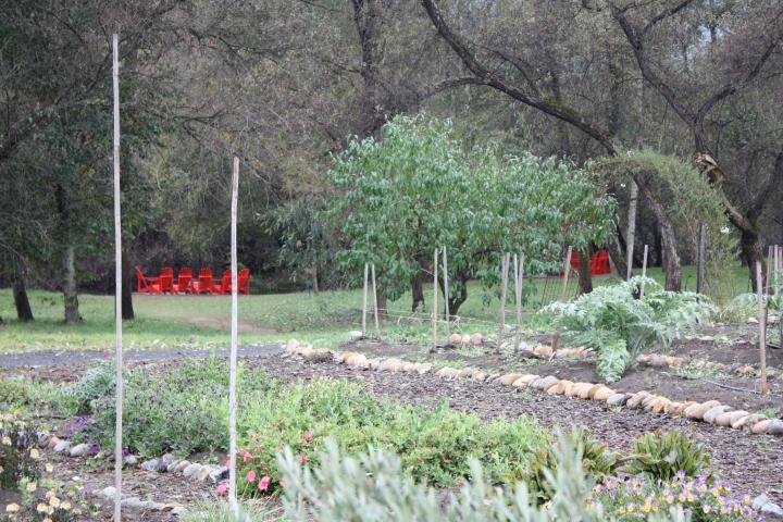 Truett-Hurst Winery - Organic gardens leading to Dry Creek