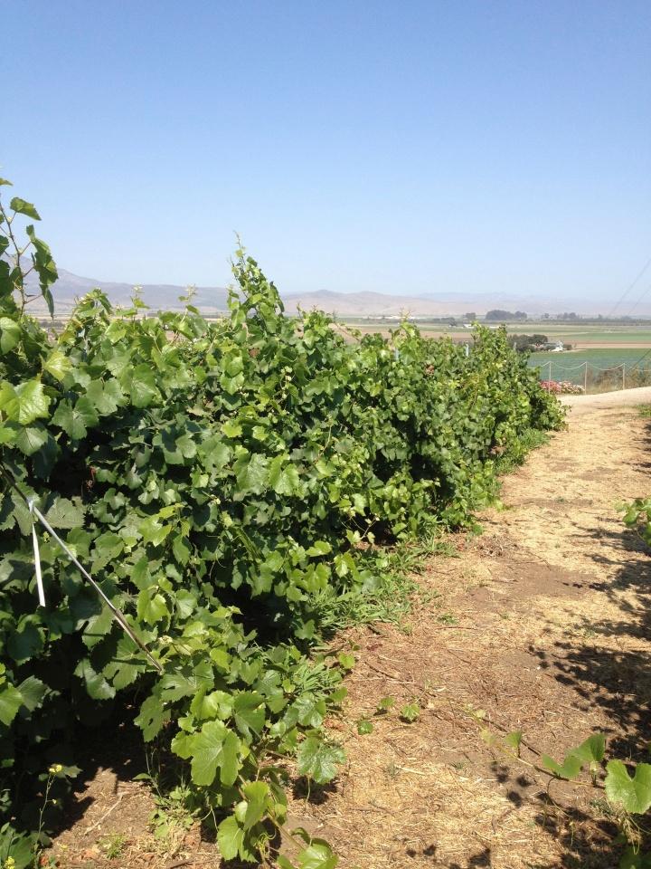Paraiso Vineyards