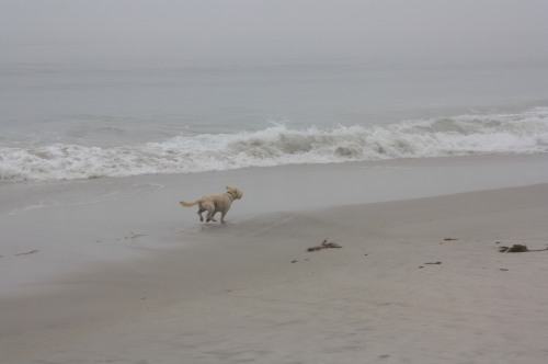 Booker enjoying a morning run on the Carmel-By-The-Sea beach