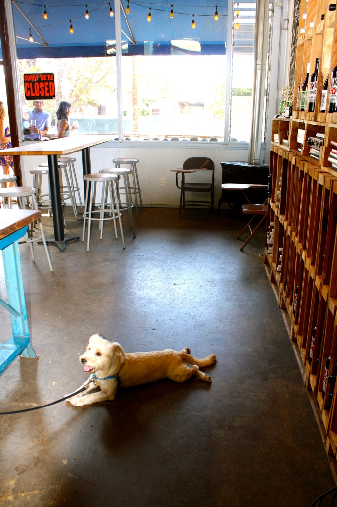 Booker relaxing on the cool floor at Municipal Winemakers
