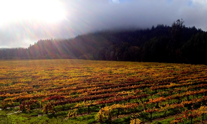 A gorgeous Fall day in the Russian River Valley