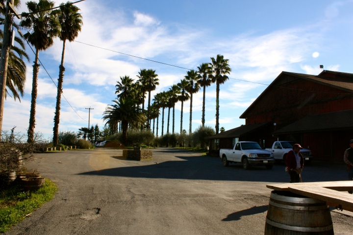 Looking out towards the parking lot at Iron Horse Vineyards