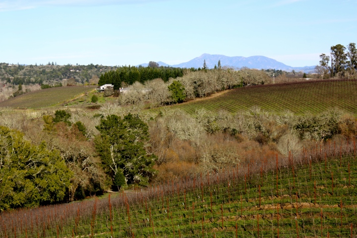 Views from Iron Horse Vineyards