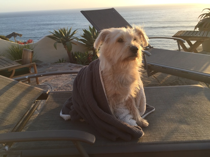 Booker watching the sun melt into the ocean in Puerto Nuevo