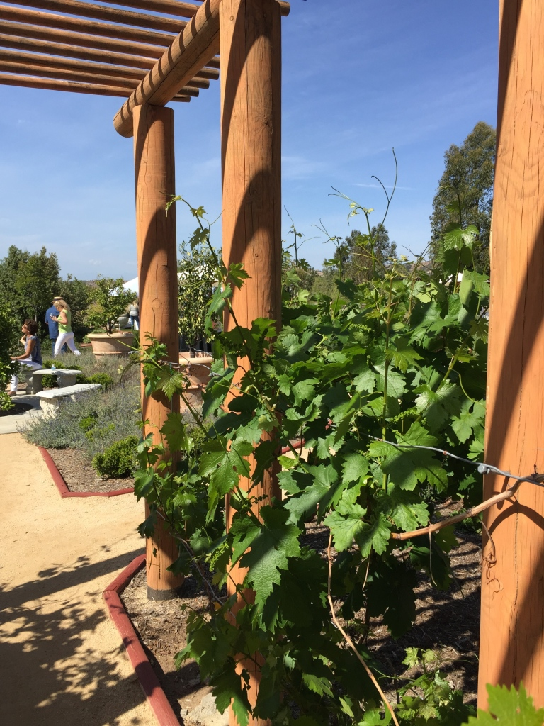 Cholame Vineyard Tasting Event