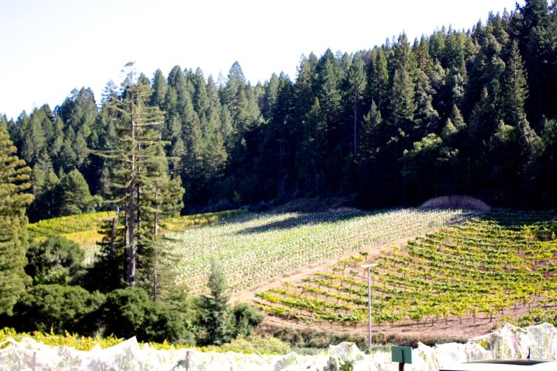© Wine-ding Road 2016