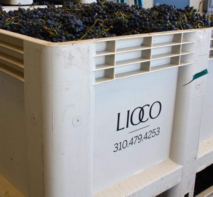 LIOCO Wine | Santa Rosa – Sonoma,CA